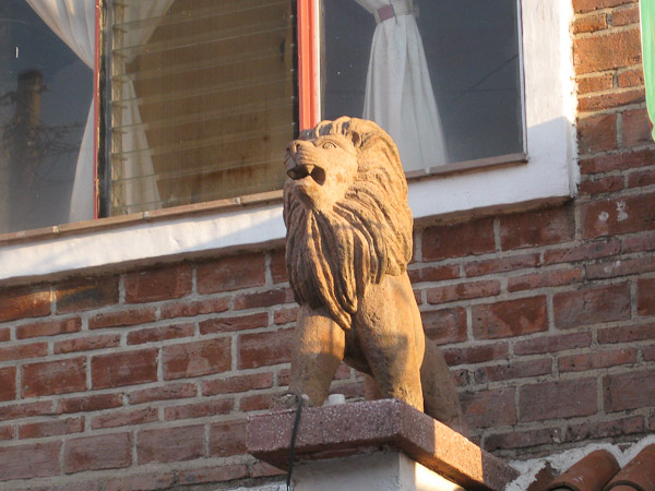 Another lion.