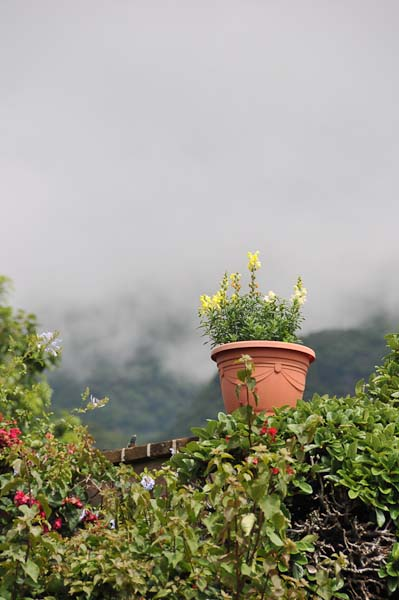 Another shot showing how colorful the flowers are enhanced by the misty mountains.