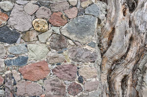 Cobblestone wall with tree.